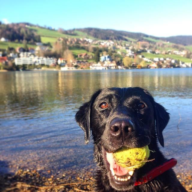 los juegos para el perro