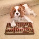 cómo estimular el cerebro de tu perro