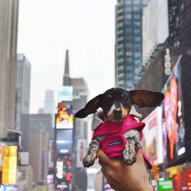 qué hacer con tu perro en vacaciones