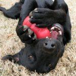 el Kon: un imprescindible para el perro