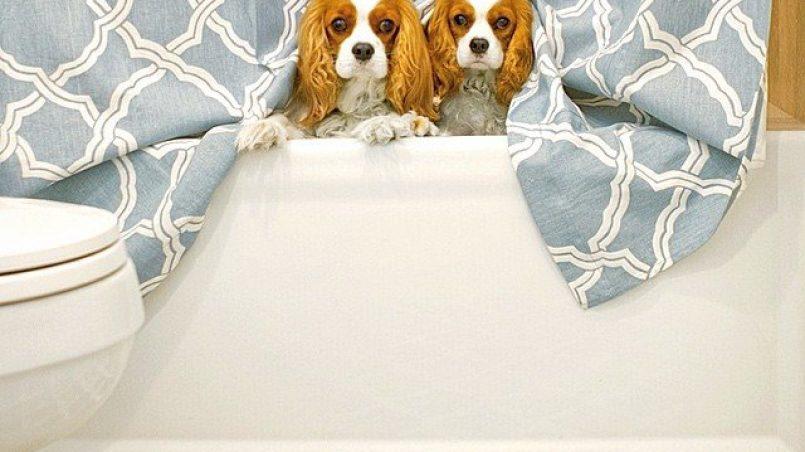 tips para mantener limpia la casa conviviendo con un perro