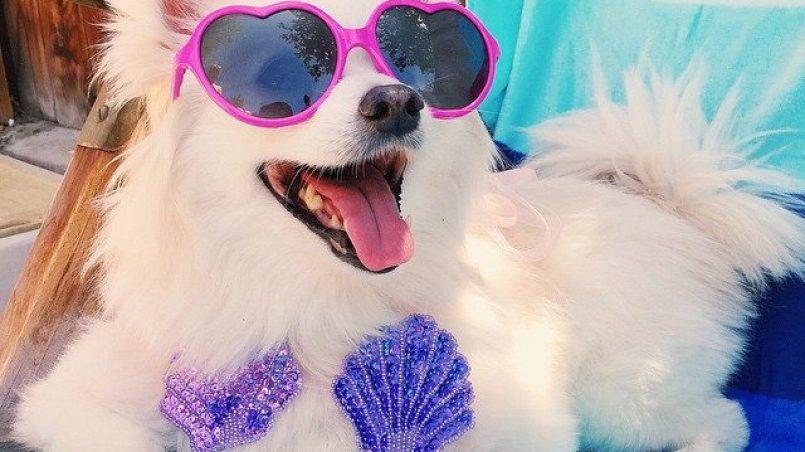 daños del sol en perros