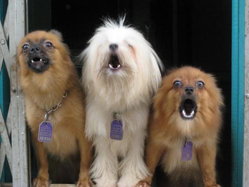 C mo evitar los ladridos del cachorro cuando se queda solo c mo educar a un cachorro - Cuando se puede banar a un cachorro ...
