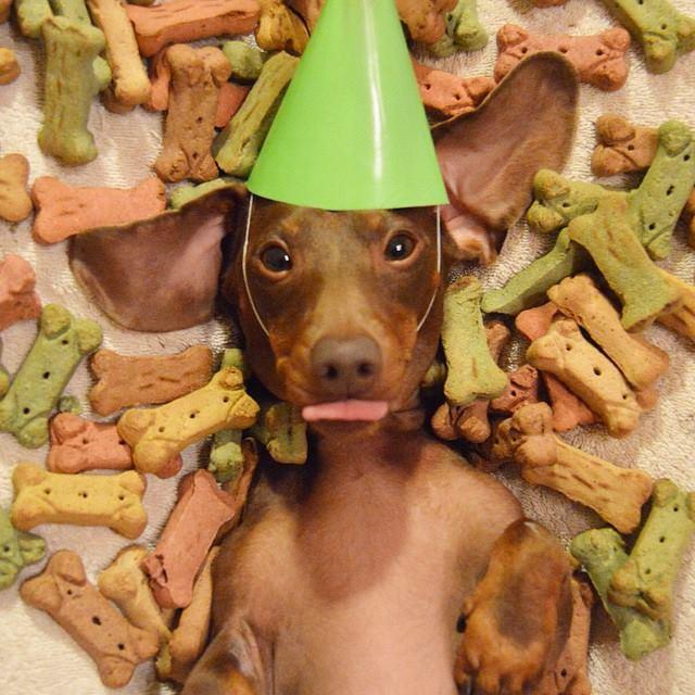 mejor comida para perro