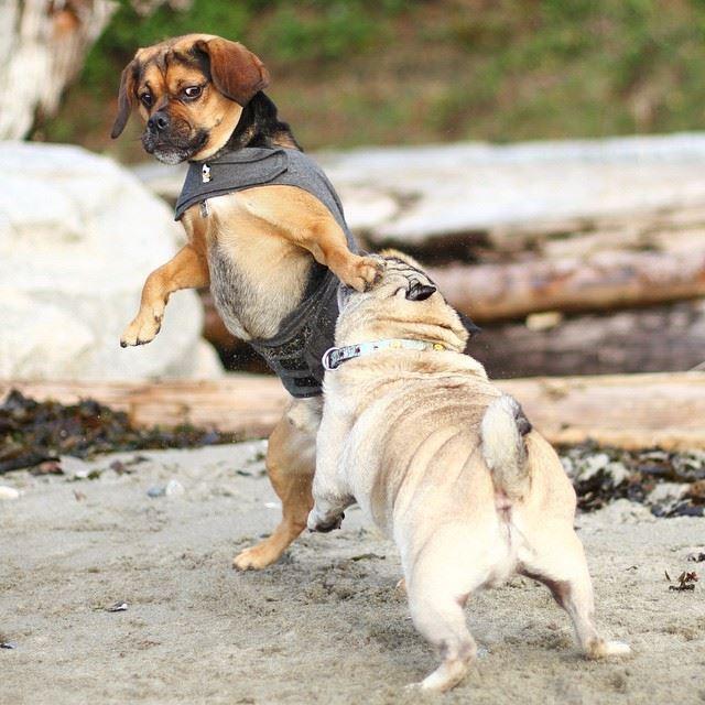 cómo evitar una pelea entre perros