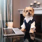 adoptar a un perro tras la jubilación