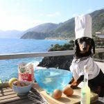 alimentación casera para perro