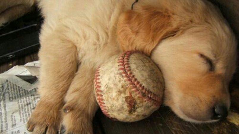 juegos para cachorros