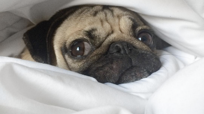 ¿perro vomita o regurgita?