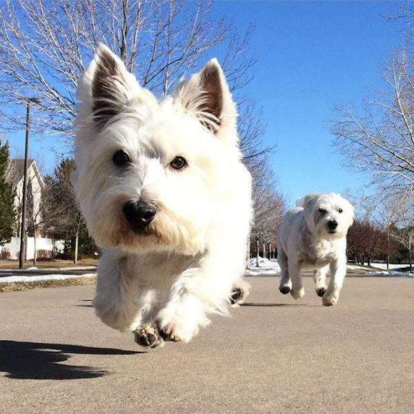 cómo actuar ante una pelea de perros