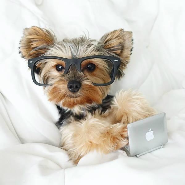 inteligencia perros