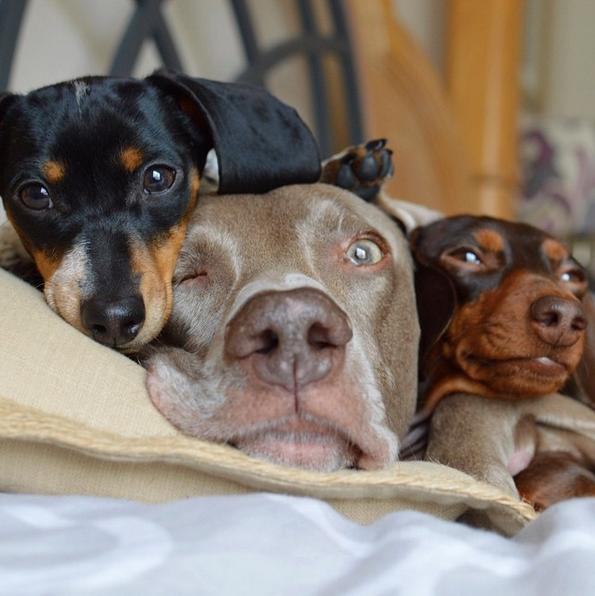 comportamiento del perro depende de su tamaño