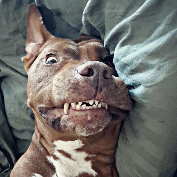 ¿tienen cosquillas los perros?