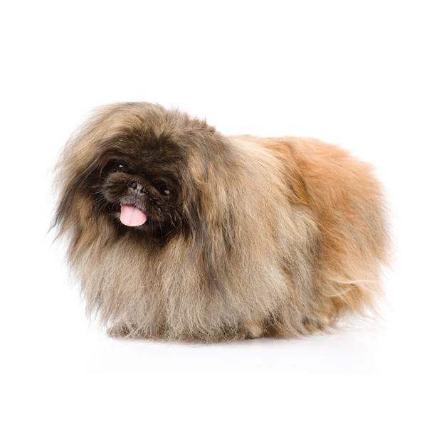 razas de perros más perezosas