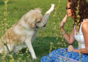 educar a un cachorro a chocar los cinco