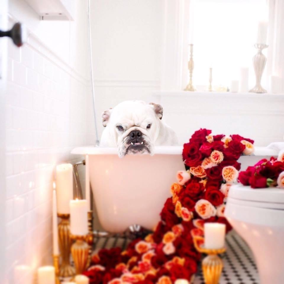 razas de perro para pequeños apartamentos