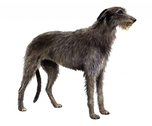 perros que viven pocos años