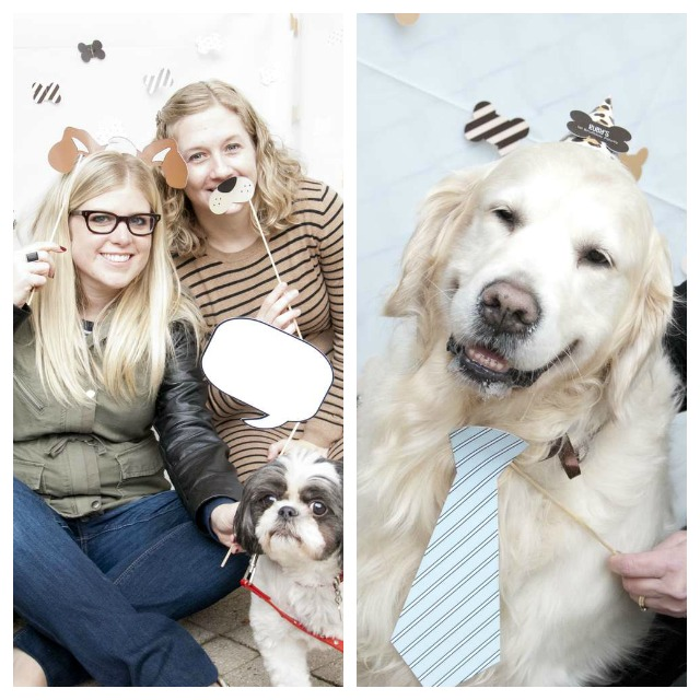 photocall para perros