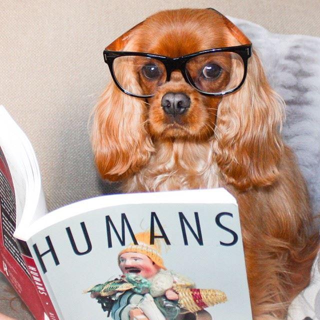 Cosas que puedes aprender de un perro