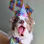 edad humana de los perros