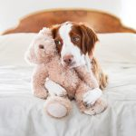 a qué edad abandonan más perros