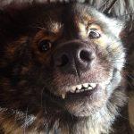 ¿Los perros pueden sonreír?