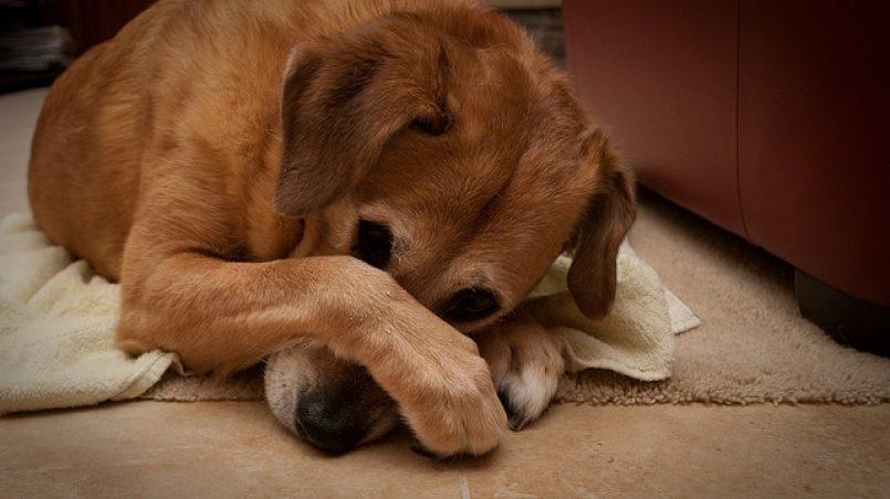 mal olor a perro