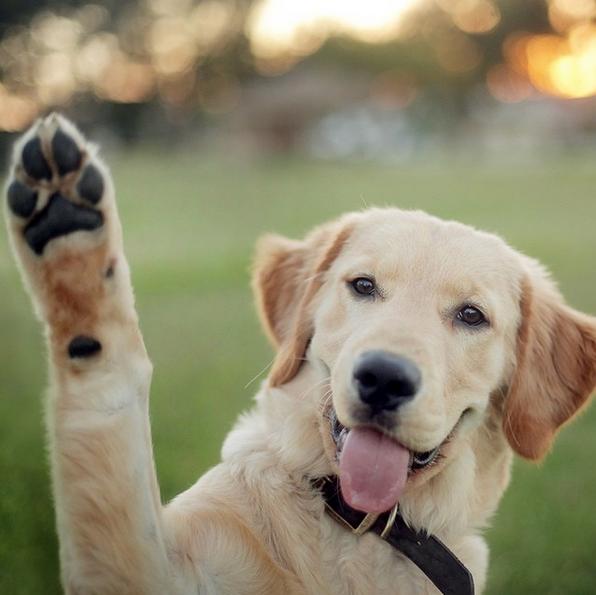trucos educativos que pueden salvar la vida de tu perro