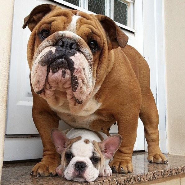 perro no acepta a cachorro