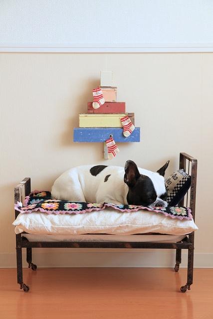 compartir cama con cachorro