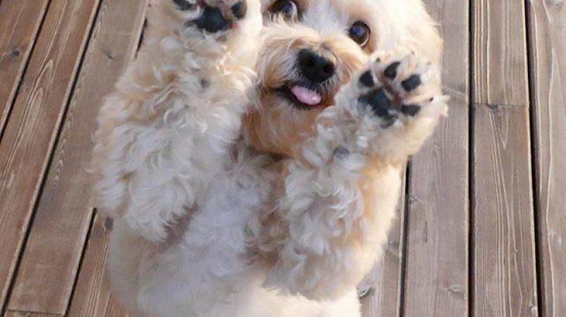 asfixia en perros