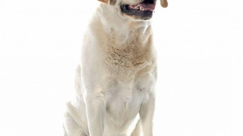 perros que peor huelen