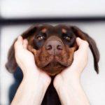 cambio de color en la nariz del perro