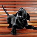 educar a un cachorro a no ladrar