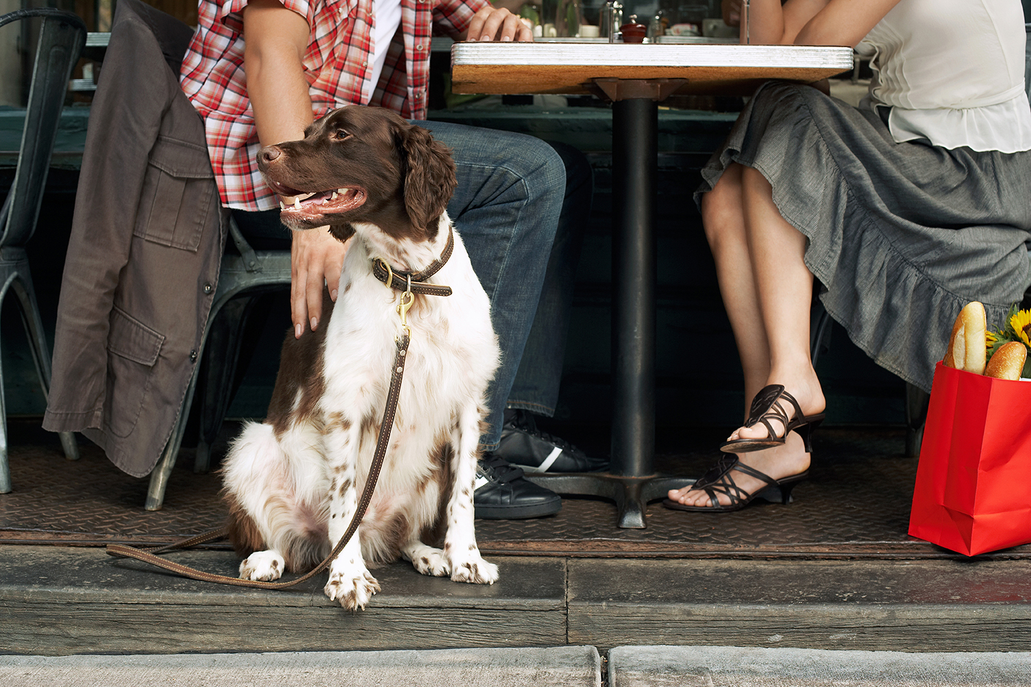 salir de terrazas y restaurantes con tu perro
