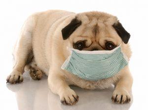 alergia a limentaria en perros