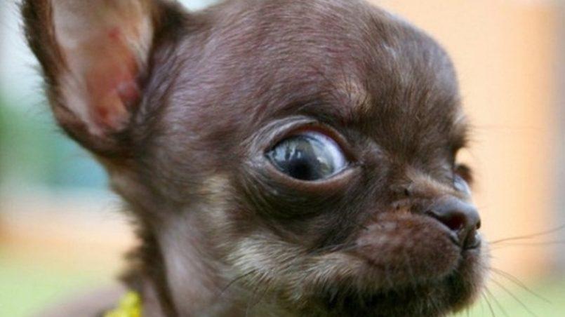 imprescindibles para perros