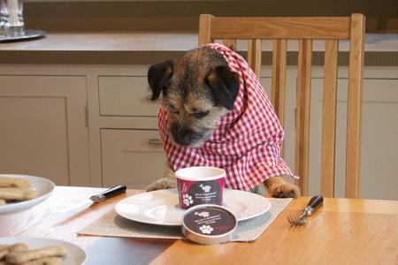 receta de helado para perro