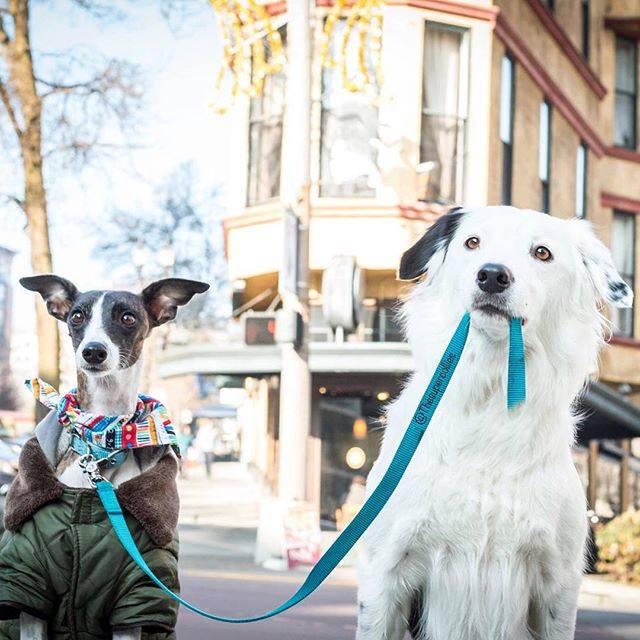 por qué perros atados son más nerviosos en paseo