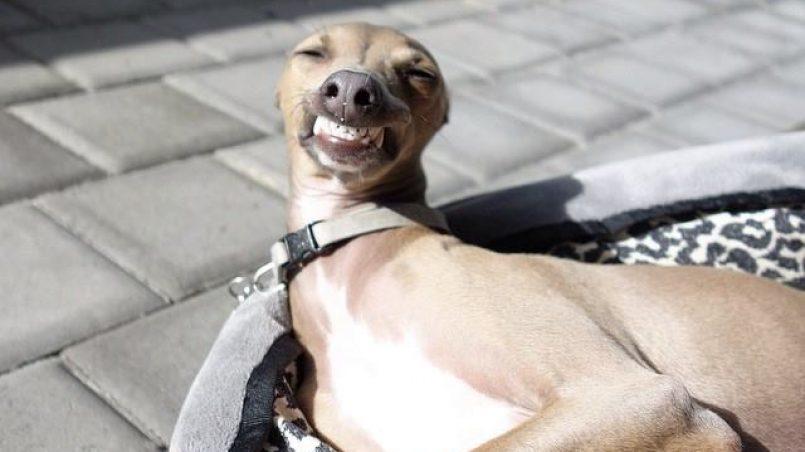 perros rechazan a personas que se portan mal con el propietario