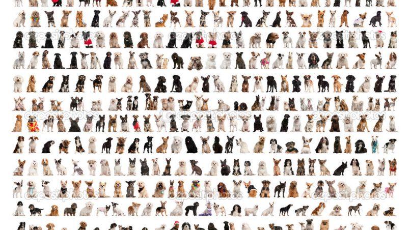 razas de perros populares