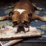 educar a un perro con periódico