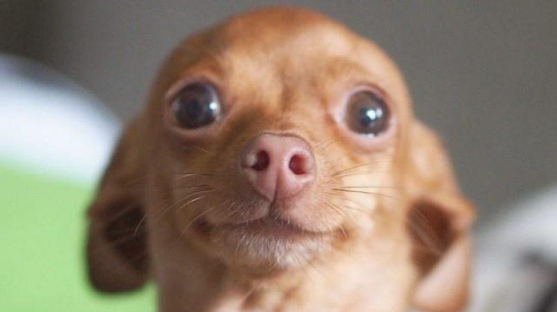 cómo enseñar a un perro a esperar