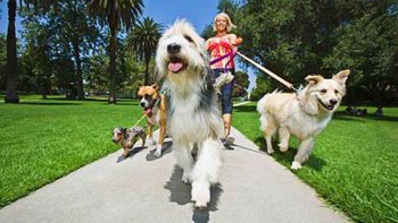 el paseo perfecto con el perro