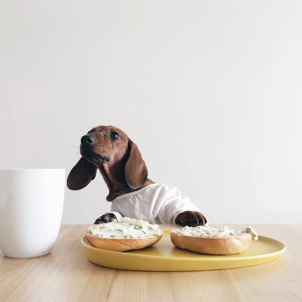 por qué el perro corre cuando le das algo delicioso