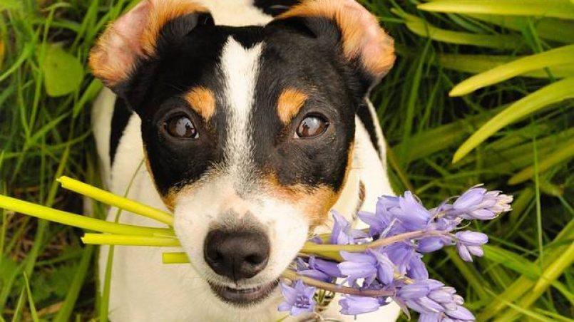 peligros de la primavera en perros