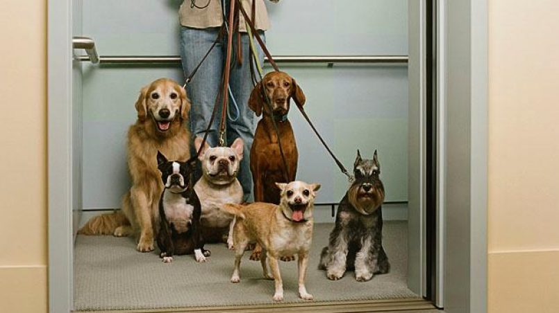 ascensor un peligro para perro