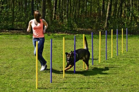 C mo hacer agility en tu jard n con tu perro c mo educar for Vallas para perros en casa