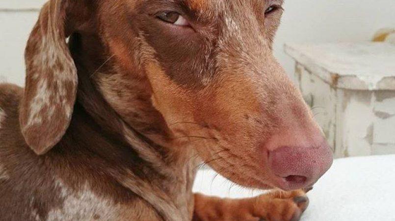 por qué miles de personas son mordidas por perros