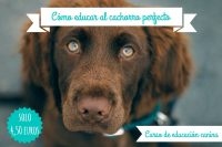 curso cómo educar al cachorro perfecto